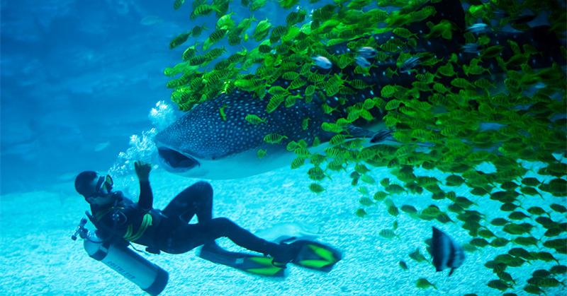 烟台海昌鲸鲨海洋公园